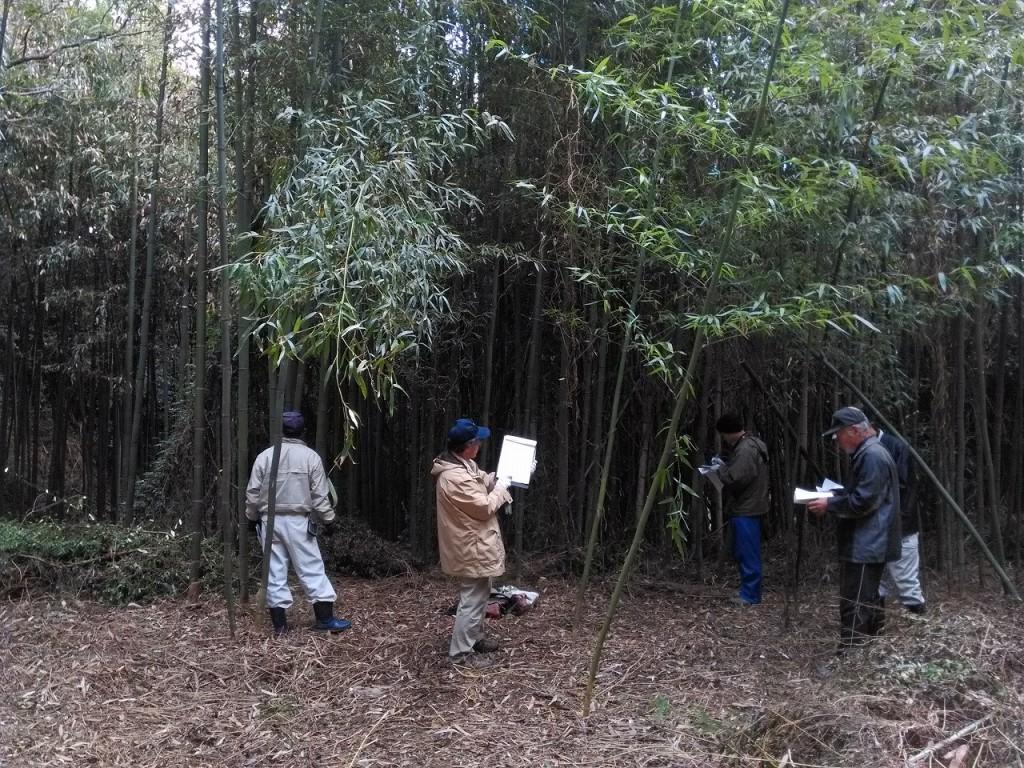 『虚空蔵山』竹林公園化プロジェクト